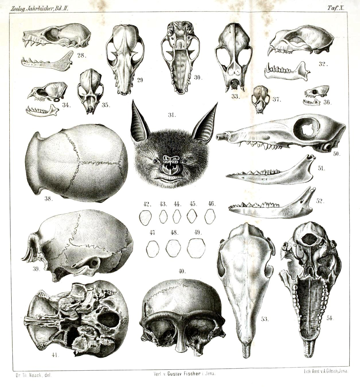 Dynamic Drawing Archive Animal Animal Head Comparative Anatomy