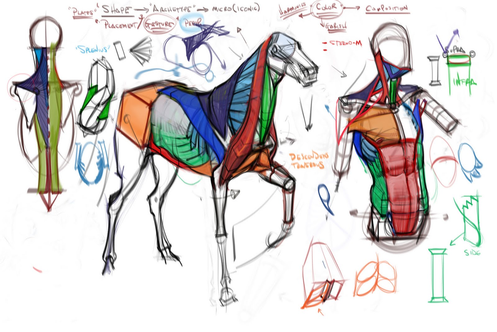 Dynamic Drawing » Archive » Comp Anatomy Wk 5