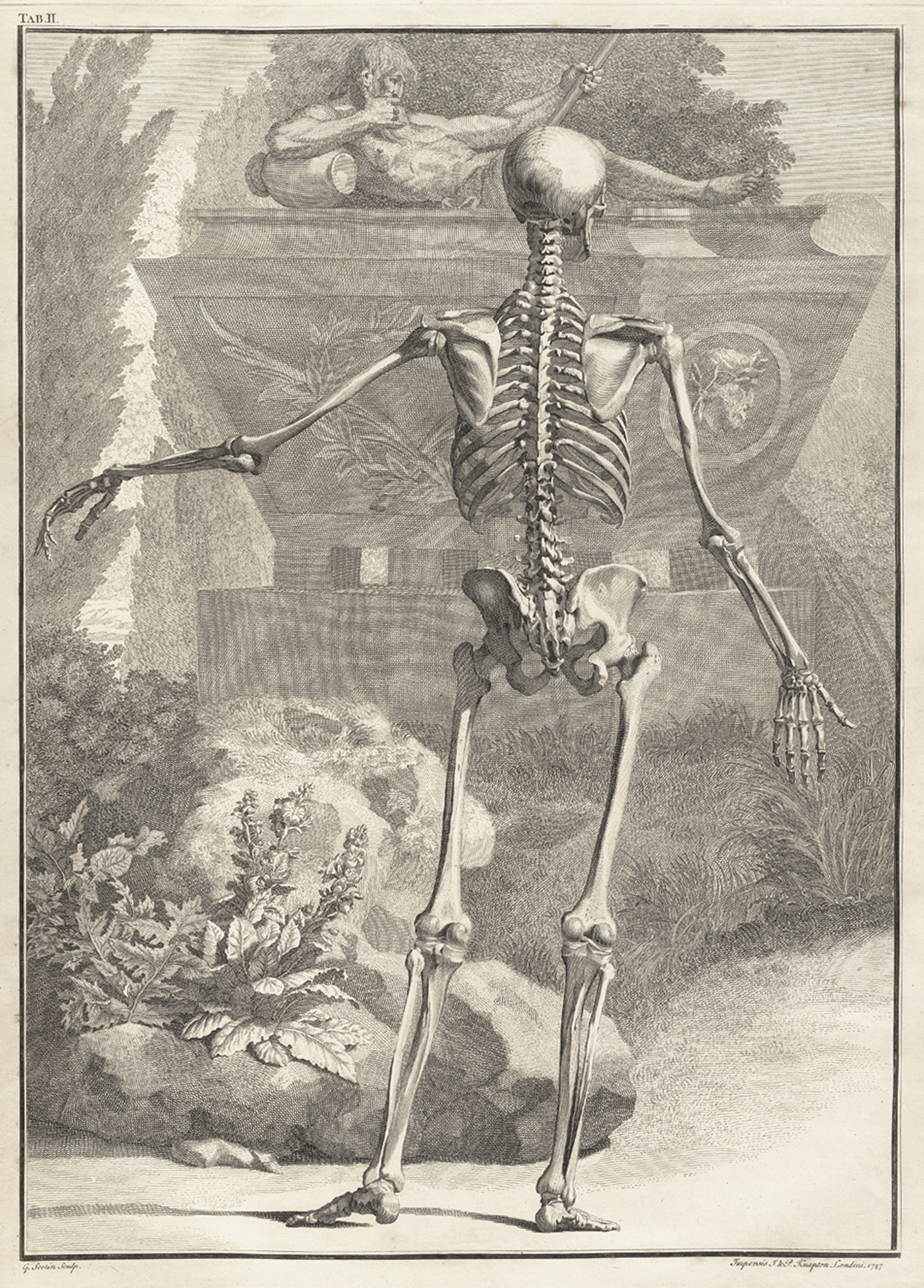 Dynamic Drawing » Archive » Skeleton-Image-01-by-Jan-Wandelaar-1690 ...