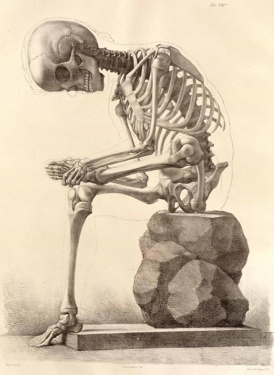 Dynamic drawing archive artistic skeleton sitting clip art artistic skeleton sitting clip art halloween card vintage kristyandbryce Images