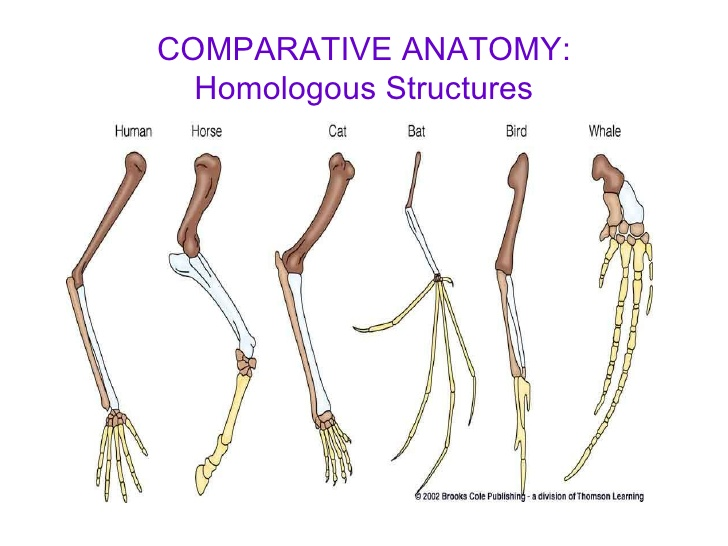 Dynamic Drawing Archive Comparative Anatomy 4 728